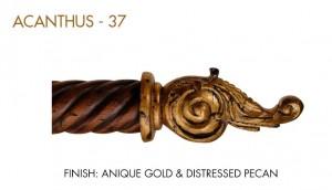 37-ACANTHUS
